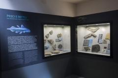 """Esposizione Naturalistica """"Preone 200 Milioni di Anni"""" – Preone"""