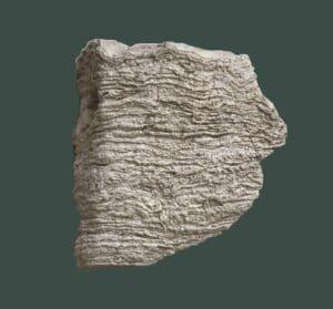 Stromatolite. M.te Amariana (Tolmezzo). Triassico